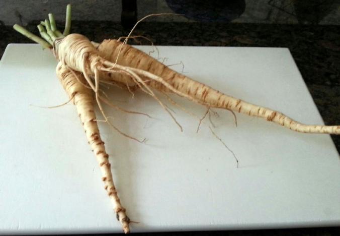 mystery vegetable
