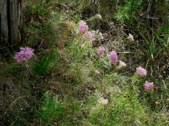 GB-Pink Flowers Jul 14