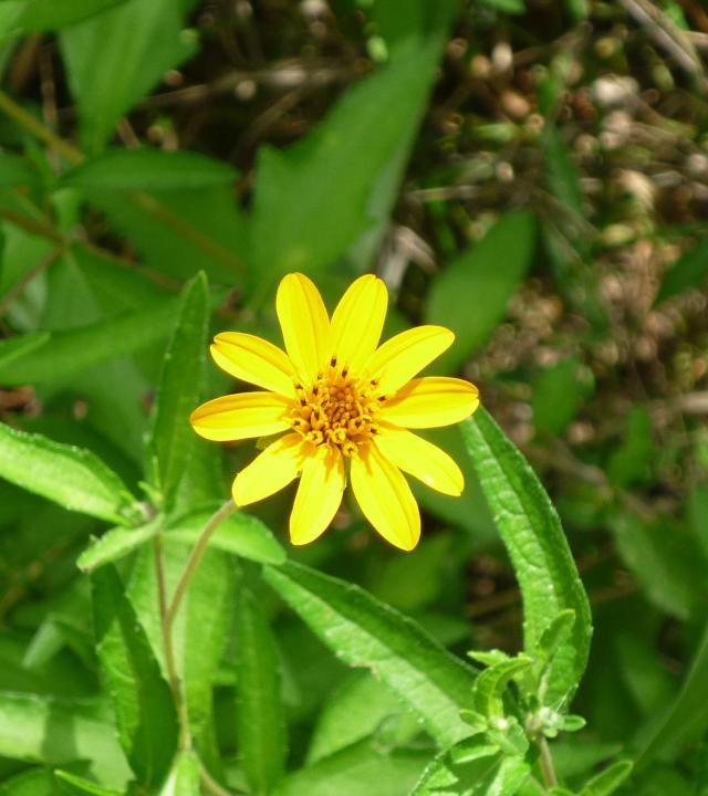 GB-Wild Flowers1 Jul 14