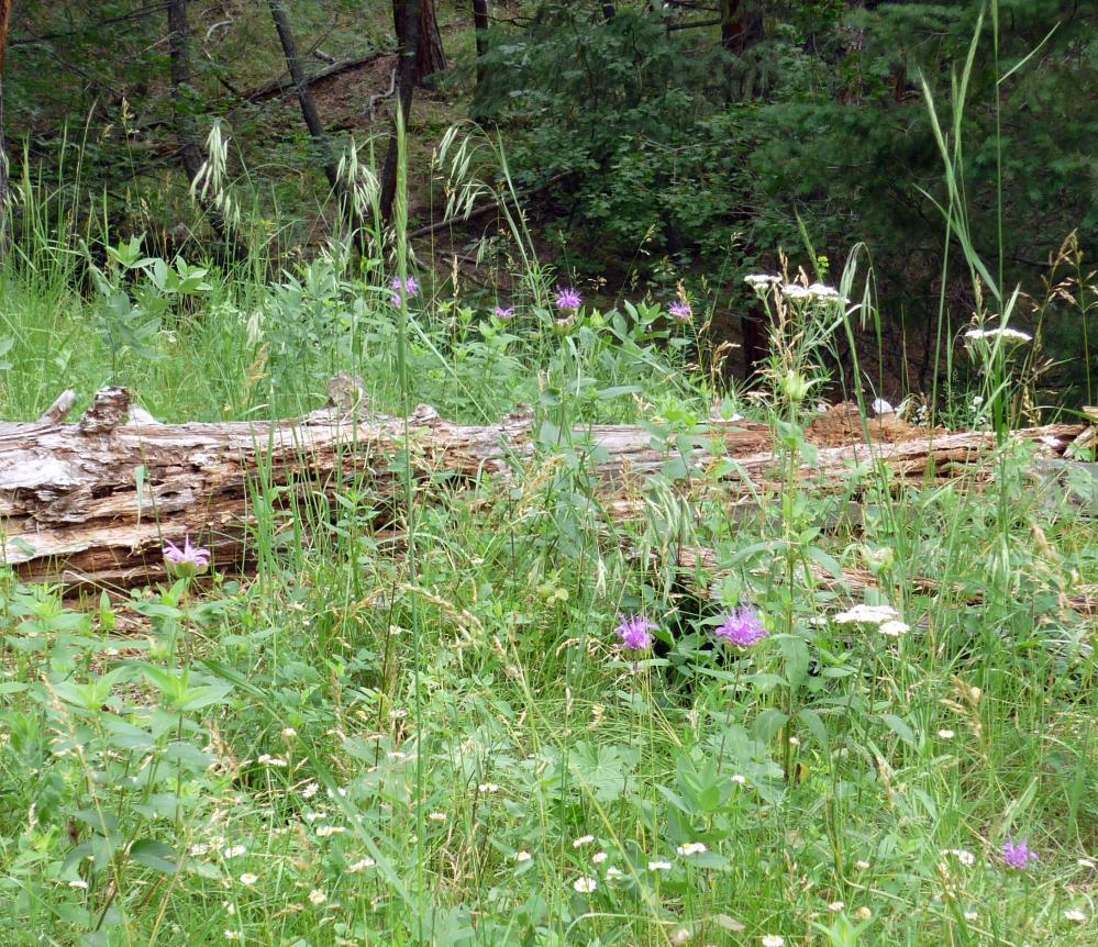 Meadow - Jul 14