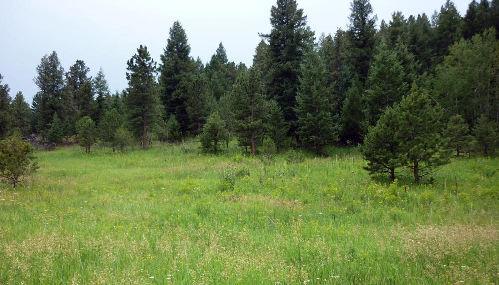 Meadow1 - Jul 14