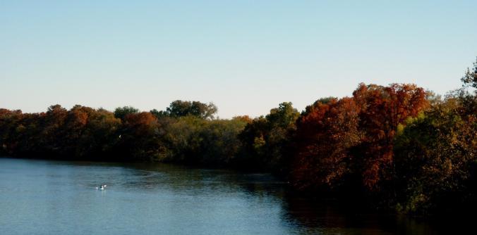 Town Lake - Nov 14