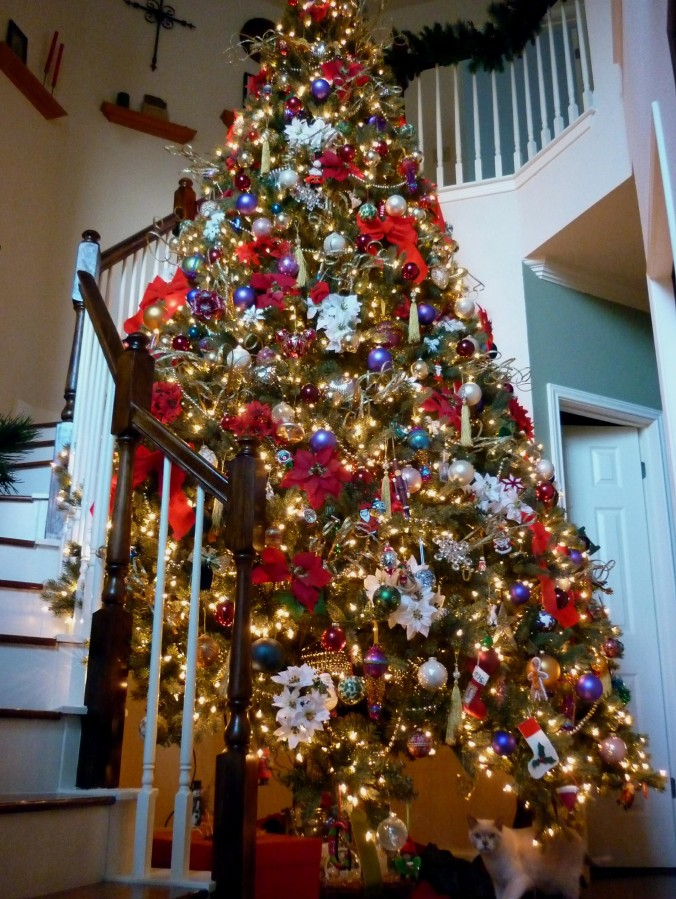 Christmas Tree and Cat - December 2014