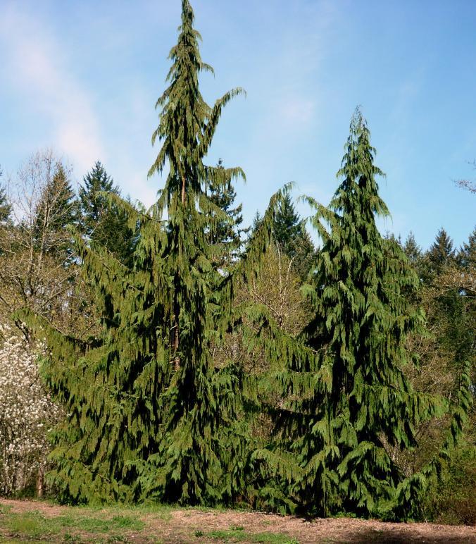 Portland OR - Washington Park2 - March 2015
