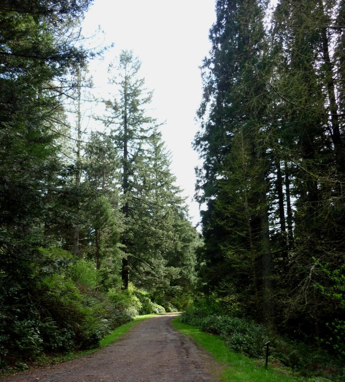 Portland OR - Washington Park3 - March 2015