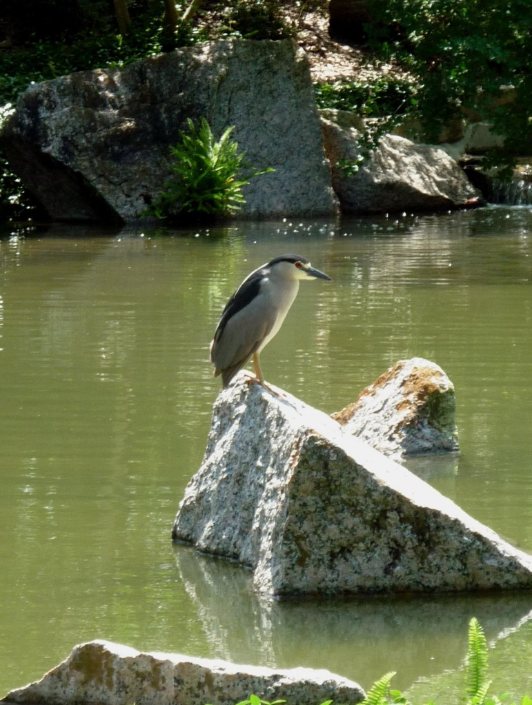 Bird - Japanese Gardens - Houston - April 2015