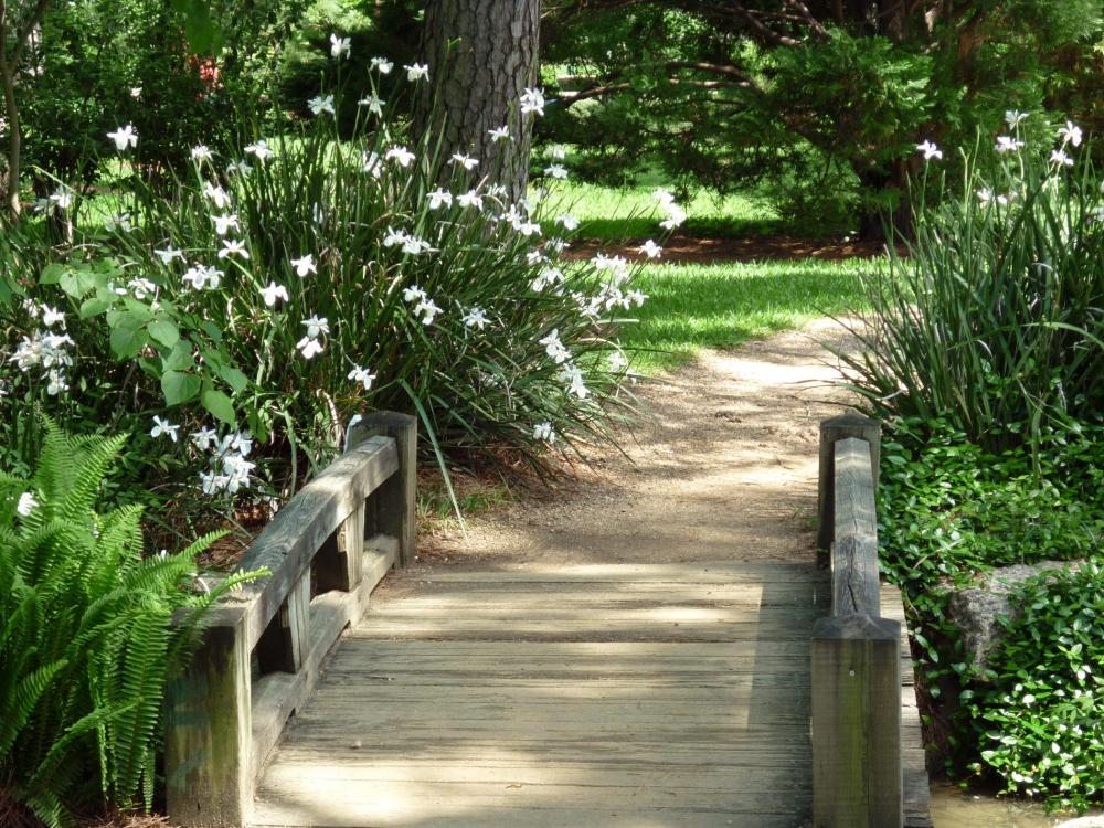 Bridge - Japanese Gardens - Houston - April 2015