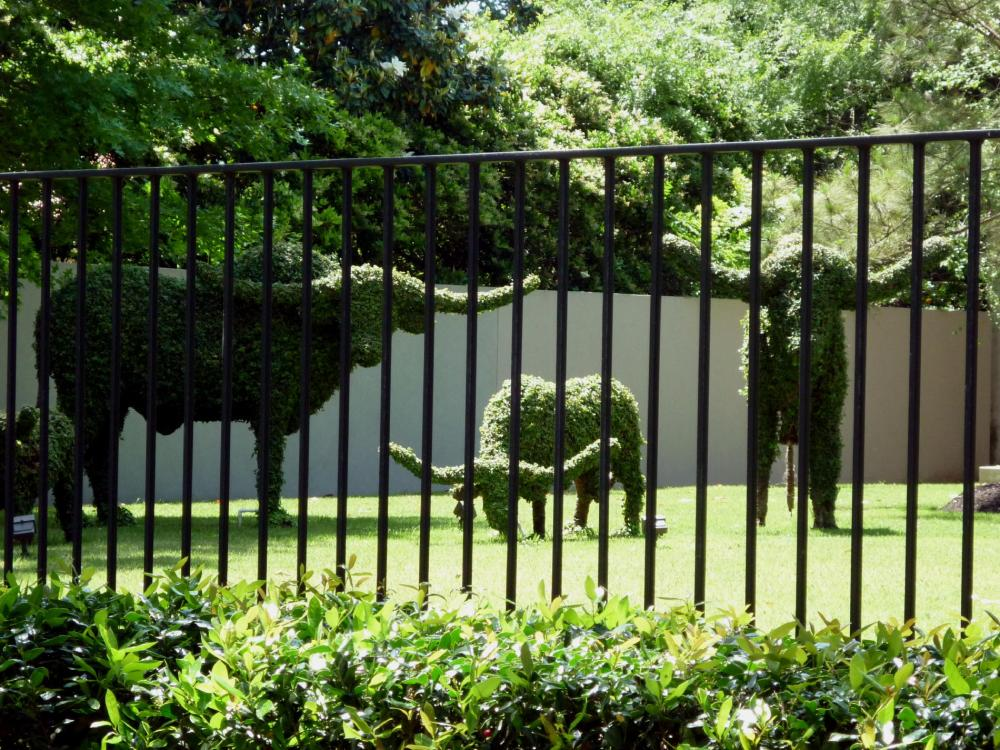 Cattle Topiary - Houston, Texas - April 2015