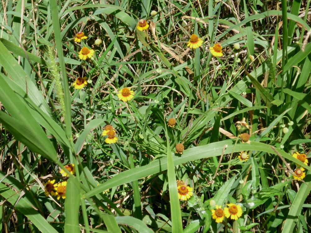 Wildflowers - July 2015