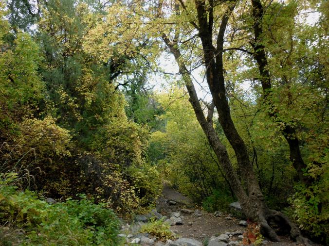 Fall Foliage - Five Hills of Death - Albuquerque NM - October 2015