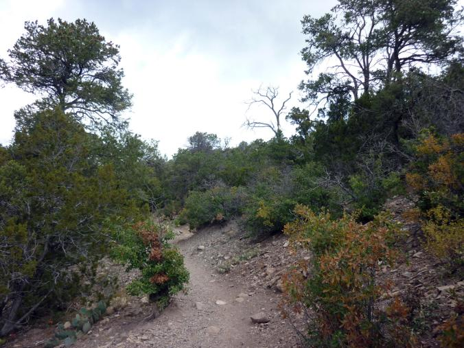 Trail - Five Hills of Death - Albuquerque NM - October 2015