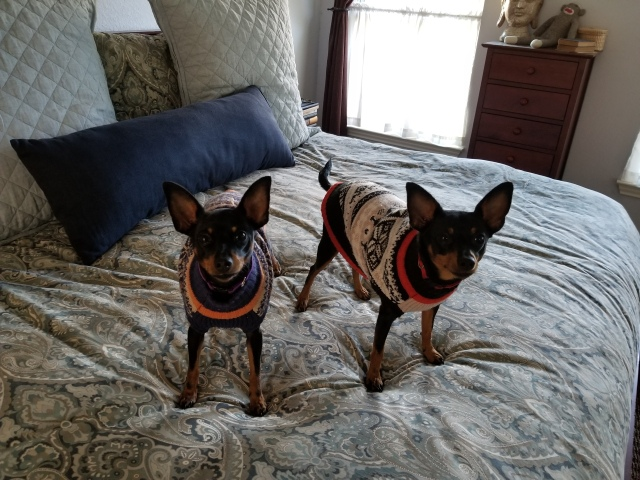 Fannie and Mabel in their sweaters - Christmas 2017 (1)