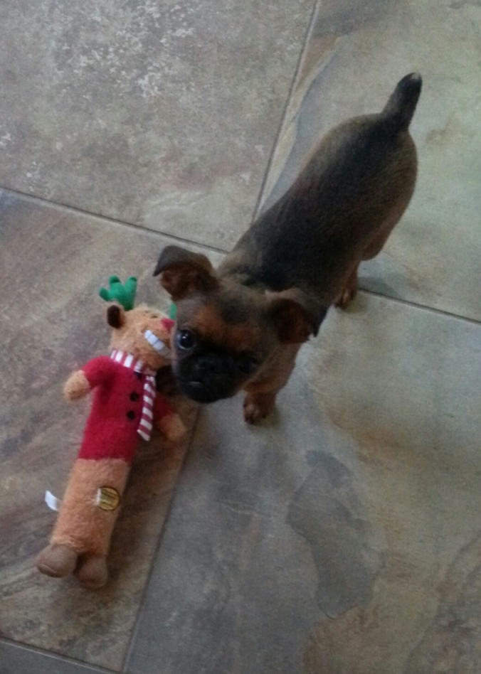 Gus and his Christmas present (1)